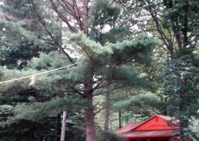 1985. Un gros pin en face du dispensaire doit être coupé