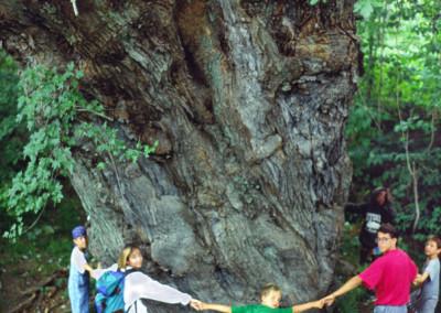 1990. Le plus gros érable argenté en Amérique se trouvait à quelques kilomètres du camp, caché sur le bord de la Dead river.  Son tronc faisait plus de 8 mètres de circonférence (26 pieds)!!! Ceci en faisait l'arbre avec le plus gros tronc de tout l'état du Maine selon le recensement officiel de l'état. Il est mort autour de 2010. On estimait son âge autour de 450 ans!